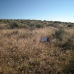 Cheatgrass in the sagebrush steppe