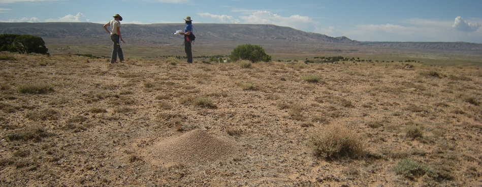 Technicians observe plant species in the desert in North Western Colorado