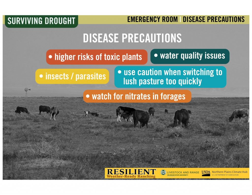 """Infographic of landscape with cows and text saying """"disease preacautions"""""""