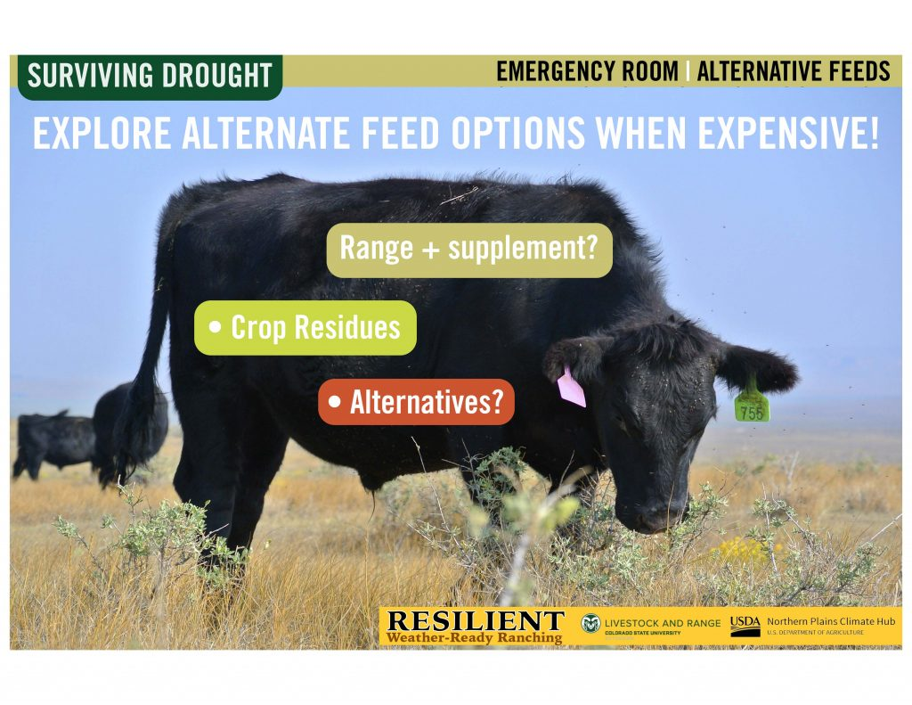 """Picture of a cow with the words """"explore alternative feed options with expensive"""""""